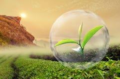 Foglia di tè verde organica nella bolla su bello paesaggio e Immagine Stock