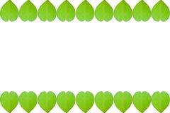 Foglia di verde del cuore del biglietto di S. Valentino dei confini su fondo bianco con la copia Fotografia Stock