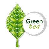 Foglia di vettore del tè verde Foglia fresca illustrazione vettoriale