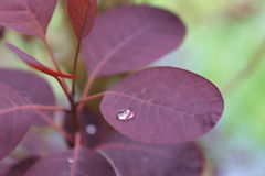 Foglia dopo un giorno di pioggia Fotografia Stock Libera da Diritti