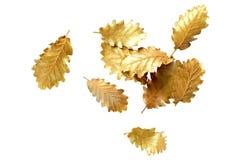 Foglia dorata su fondo bianco Fotografia Stock Libera da Diritti