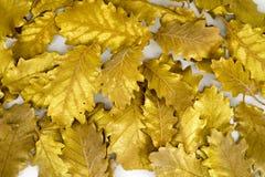 Foglia dorata su fondo bianco Immagine Stock