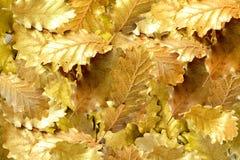 Foglia dorata su fondo bianco Immagini Stock