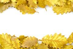 Foglia dorata su fondo bianco Immagini Stock Libere da Diritti