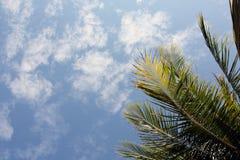 Foglia e chiara vista del cielo Immagini Stock Libere da Diritti