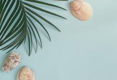 Foglia e conchiglie tropicali su un fondo blu pastello la cima rivaleggia Fotografia Stock