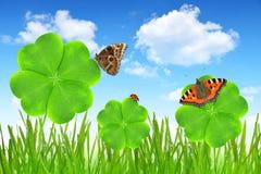 Foglia e farfalle del trifoglio Fotografia Stock Libera da Diritti