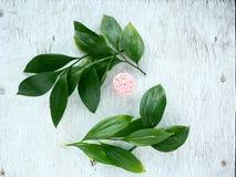 Foglia e fiore tropicali Il piano floreale mette sul contesto rustico Vista superiore della struttura naturale fotografia stock