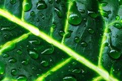 Foglia e goccia di pioggia Immagine Stock
