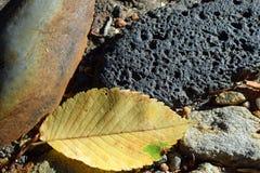 Foglia e rocce Fotografie Stock