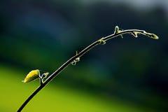 Foglia e vite verdi fresche sul fondo della sfuocatura Fotografie Stock Libere da Diritti
