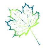 Foglia elegante di verde del modello Immagini Stock Libere da Diritti