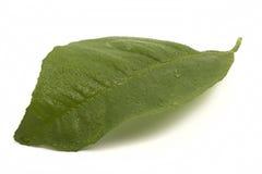Foglia fresca del limone nelle gocce Fotografia Stock