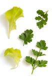Foglia fresca dell'insalata e del prezzemolo isolata su bianco Immagine Stock Libera da Diritti