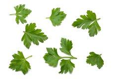 foglia fresca verde del prezzemolo isolata su fondo bianco fotografie stock