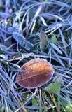 Foglia gelida di mattina Fotografia Stock Libera da Diritti