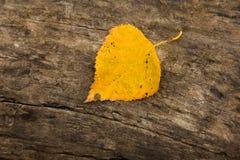 Foglia gialla Fotografie Stock Libere da Diritti