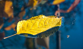 Foglia gialla che galleggia in acqua Fotografie Stock
