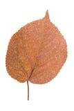 Foglia gialla come simbolo di autunno Fotografia Stock