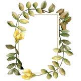 Foglia gialla dell'acacia dell'acquerello Fogliame floreale del giardino botanico della pianta della foglia Quadrato dell'ornamen royalty illustrazione gratis