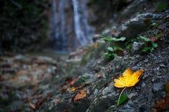 Foglia gialla di autunno su un fondo della cascata Immagini Stock