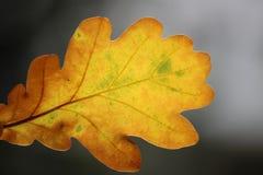 Foglia gialla di autunno su un fondo scuro fotografia stock libera da diritti