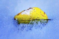 Foglia gialla di autunno in una neve Fotografia Stock