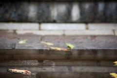 Foglia gialla di autunno in una pozza sui punti fotografie stock libere da diritti