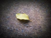 Foglia gialla sul pavimento del cemento Immagini Stock