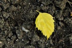 Foglia gialla sulla terra Immagine Stock
