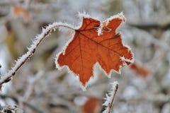 Foglia guarnita in ghiaccio Fotografie Stock Libere da Diritti