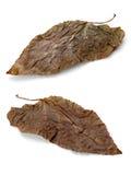 Foglia marrone due Fotografia Stock