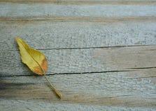 Foglia minuscola di caduta su legno Fotografia Stock Libera da Diritti