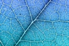 Foglia nerved verde con il modello astratto Fondo astratto per botanica, biologia ed ecologia Orizzontale con lo spazio della cop fotografie stock
