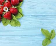Foglia organica fresca della fragola che coltiva il raccolto di estate su un fondo di legno blu Immagini Stock Libere da Diritti
