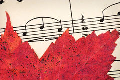 Foglia rossa su musica d'annata Fotografia Stock