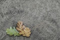 Foglia secca di autunno su fondo di legno Fotografie Stock Libere da Diritti