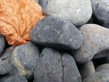 Foglia secca su piccolo, arrotondato, ciottoli della roccia Fotografia Stock