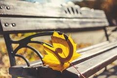 Foglia sola del cuneo sul primo piano del banco di legno Fotografie Stock