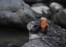 Foglia sola di autunno sui massi immagine stock