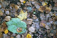 Foglia sola di autunno sulla pavimentazione Fotografia Stock Libera da Diritti