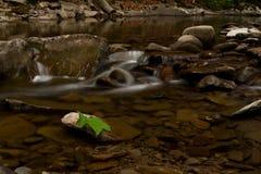 Foglia sola nel fiume Immagine Stock
