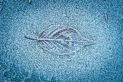 Foglia sola nel gelo di inverno Fotografia Stock