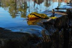 Foglia sopra acqua disturbata Fotografia Stock Libera da Diritti