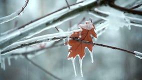 Foglia su una neve dell'albero stock footage