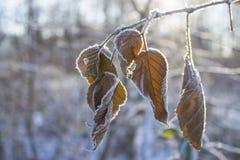 foglia sul fondo di inverno Fotografie Stock Libere da Diritti