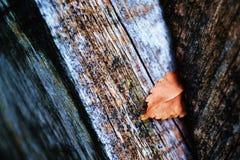 Foglia sul legno Fotografia Stock Libera da Diritti