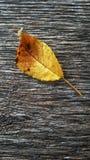 Foglia sul legno in dettaglio Fotografia Stock
