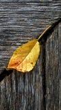 Foglia sul legno in dettaglio Fotografie Stock