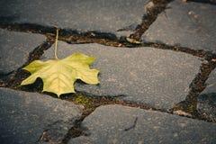 Foglia sulla pavimentazione Fotografia Stock
